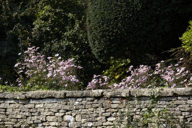anemones-white-britt-willoughby-dyer-gardenista-BN2A0224