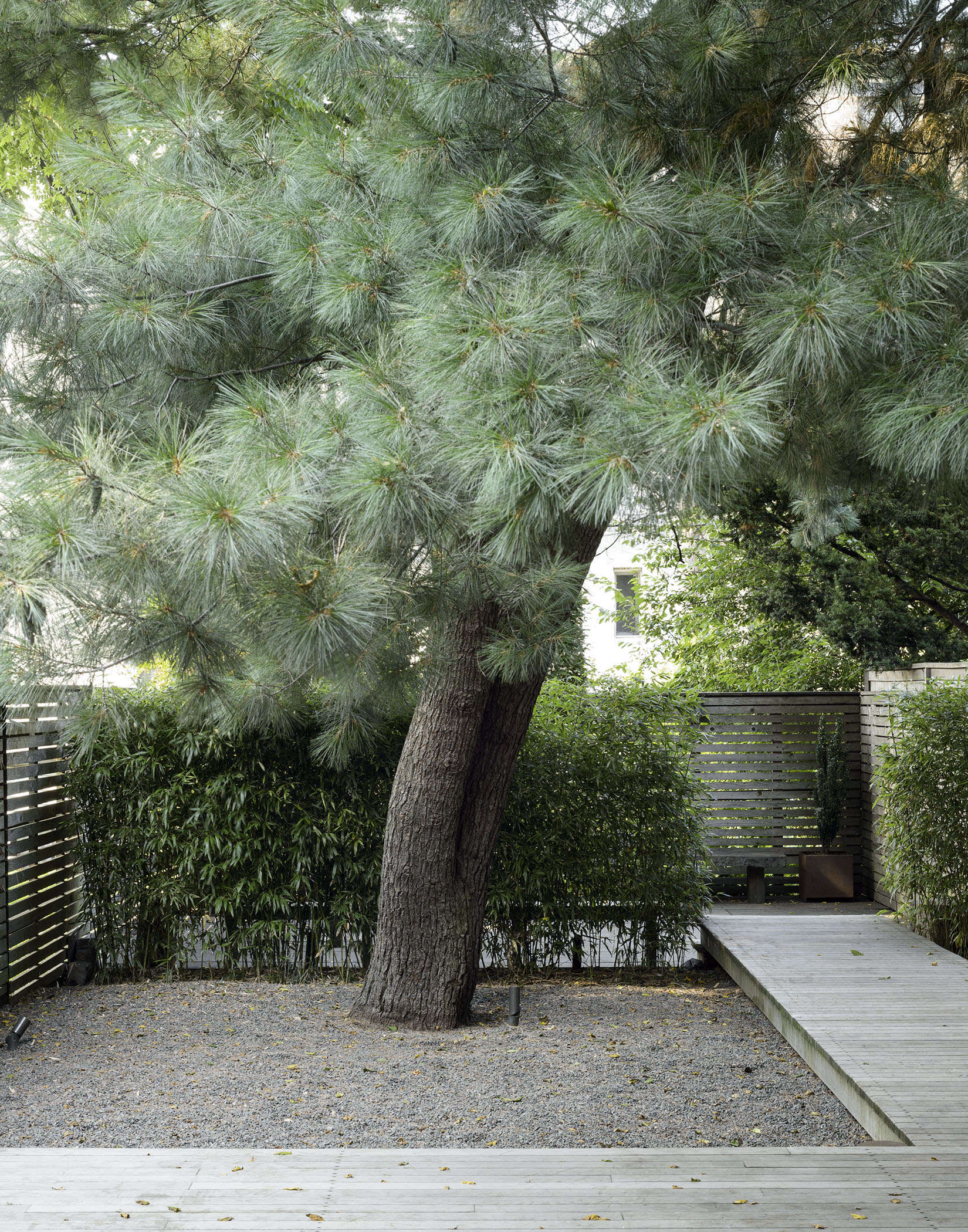 Above: For Clients In Brooklyn, Garden Designers Welti And Partner Paige  Keck Of Foras Studio Nursed Back To Health A Blue Needled Eastern White Pine  Tree ...