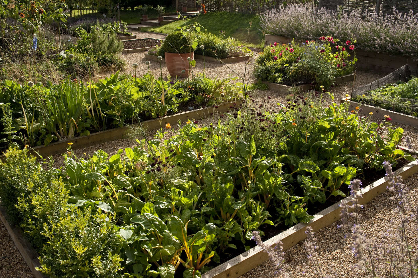 Photograph by Kevin Foord. Summer flowers and edible plants in raised beds at Darsham Nurseries in the UK. See more at Shopper's Diary: Darsham Nurseries on the Suffolk Coast.