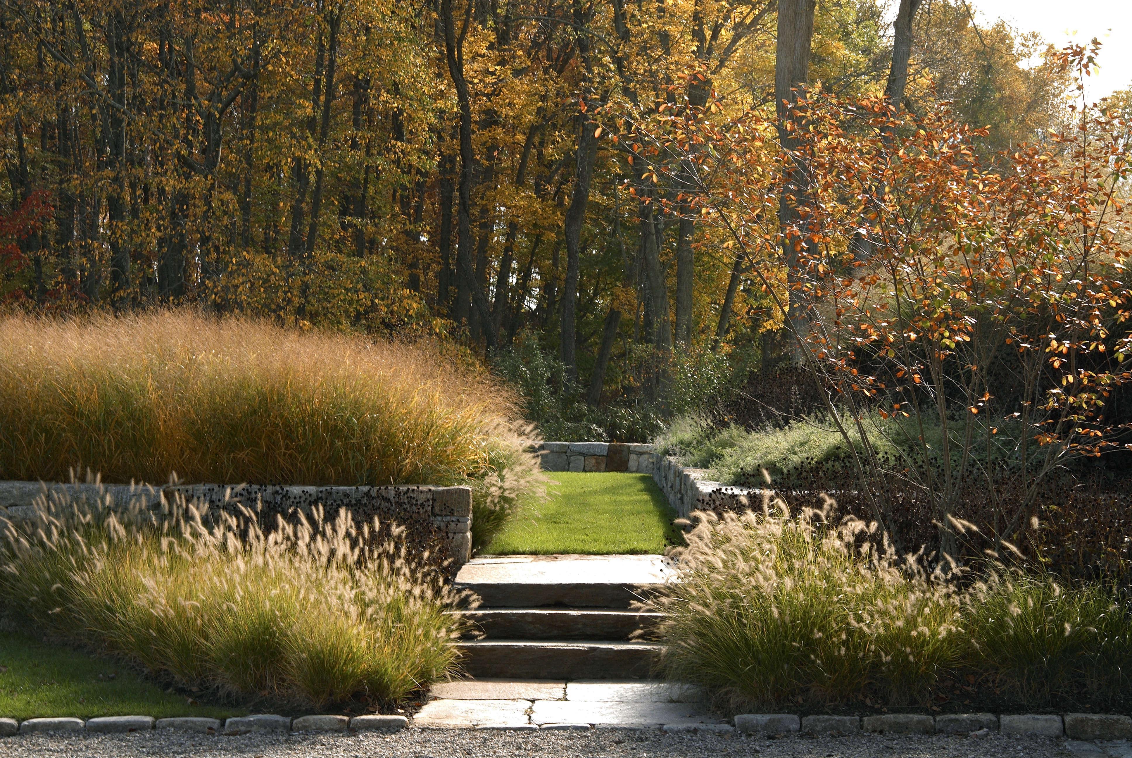 Gardening 101: Fountain Grass - Gardenista