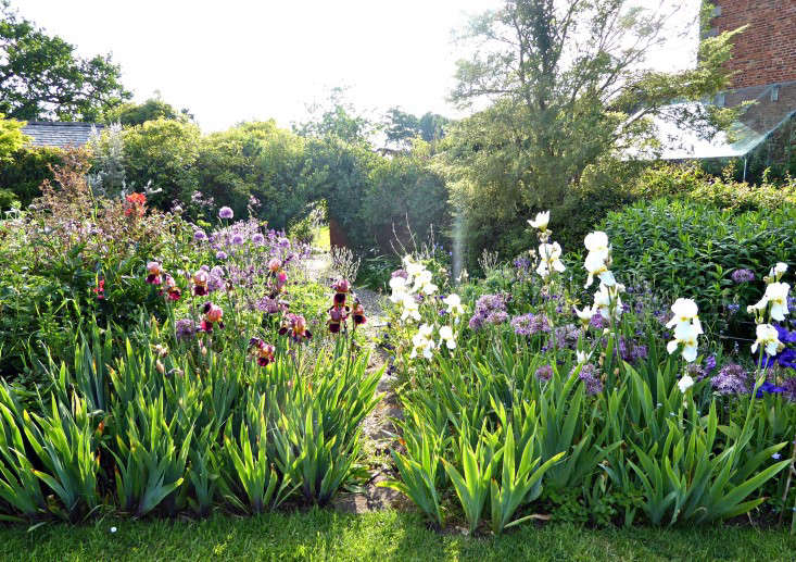 Photograph by Clare Coulson for Gardenista. In early summer, the deep maroon Iris 'Indian Chief' (at Left) shimmers in the soft light in a border filled with irises at the Jacobean manor house Tattenhall Hall. For more, see Garden Visit: Flower Borders in a Colorful English Garden.