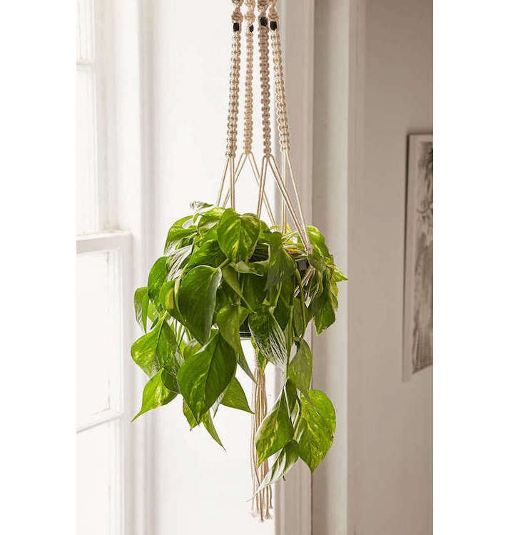 urban-outfitters-macrame-plant-hanger-gardenista