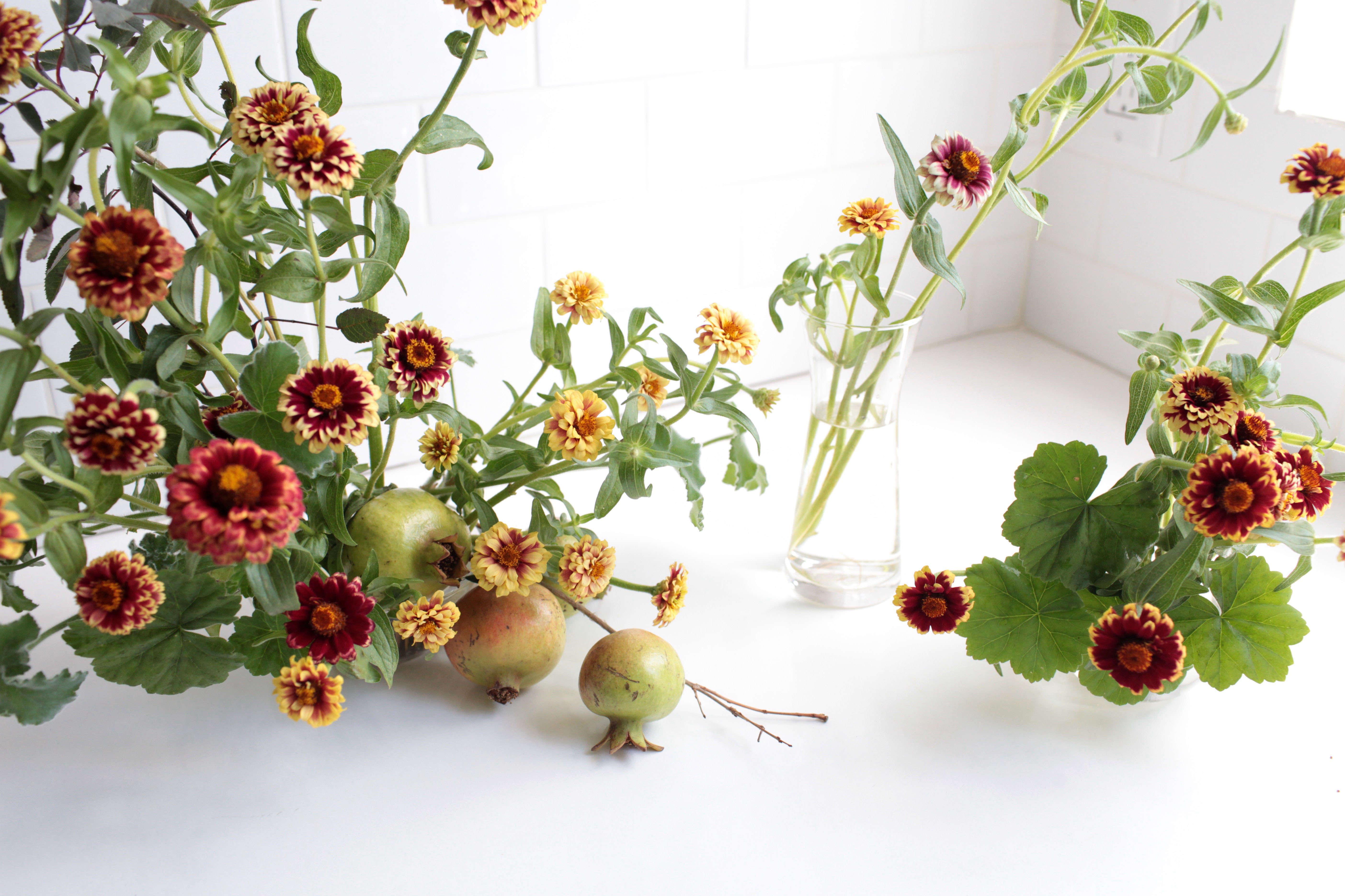 Zinnias: Rethinking a Farm Stand Flower - Gardenista