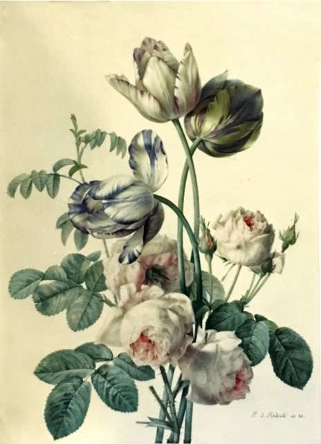 Mellon collection Redoute botanical watercolor tulips and roses NYBG
