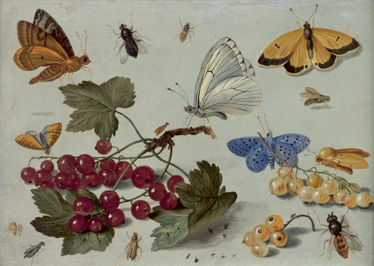 Mellon collection vanKessel botanical butterflies oil painting NYBG