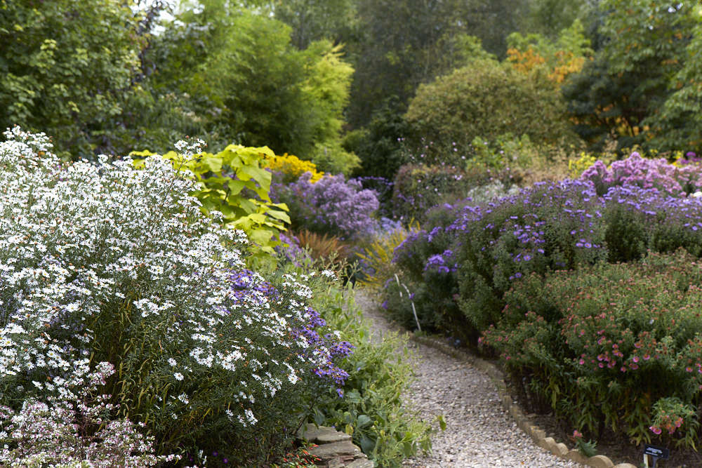 To avoid tumbling flower towers, stake the taller varieties. Also remember to routinely deadhead exhausted flowers and then cut back in the winter after the foliage has declined.