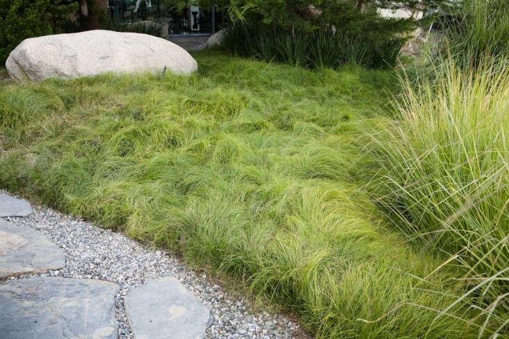 Gardening 101 Carex Gardenista