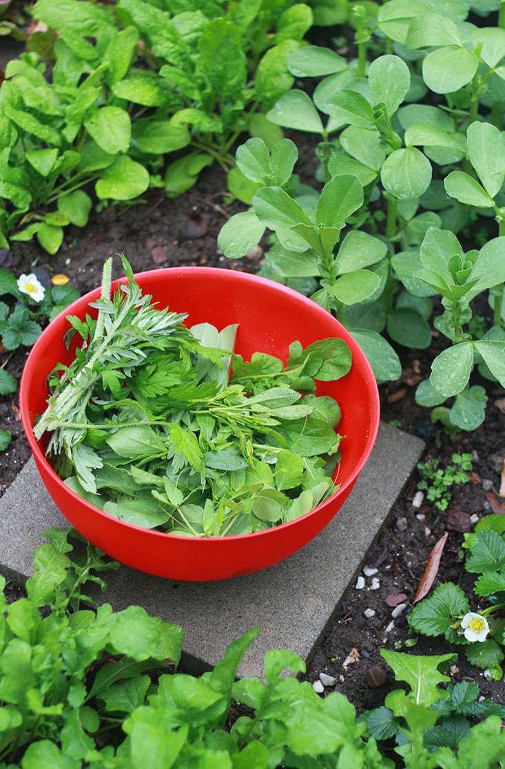 crops-for-shade-marieviljoen