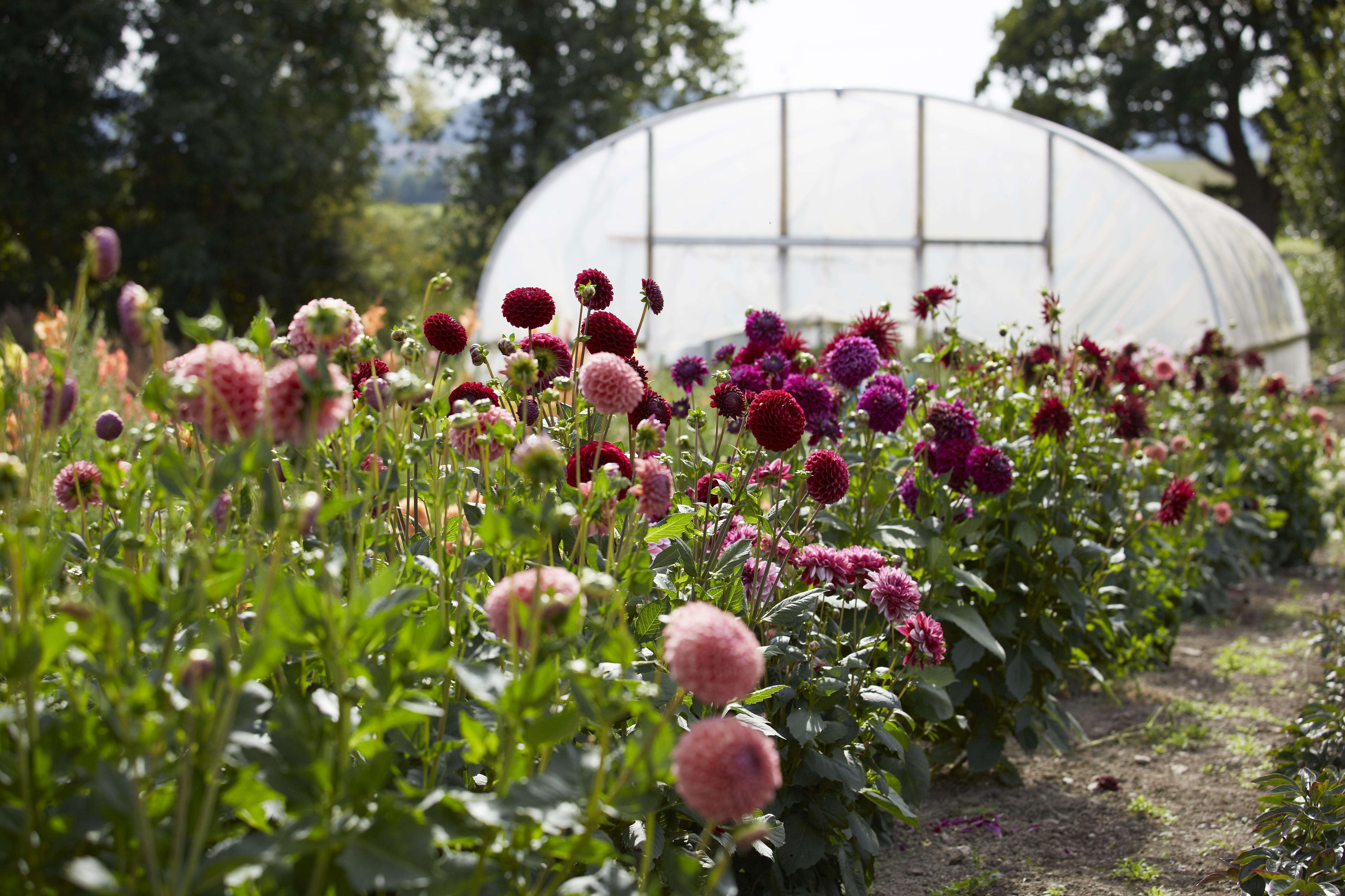 Wild bunch in the studio with floral designer tammy hall in wild bunch in the studio with floral designer tammy hall in shropshire gardenista izmirmasajfo