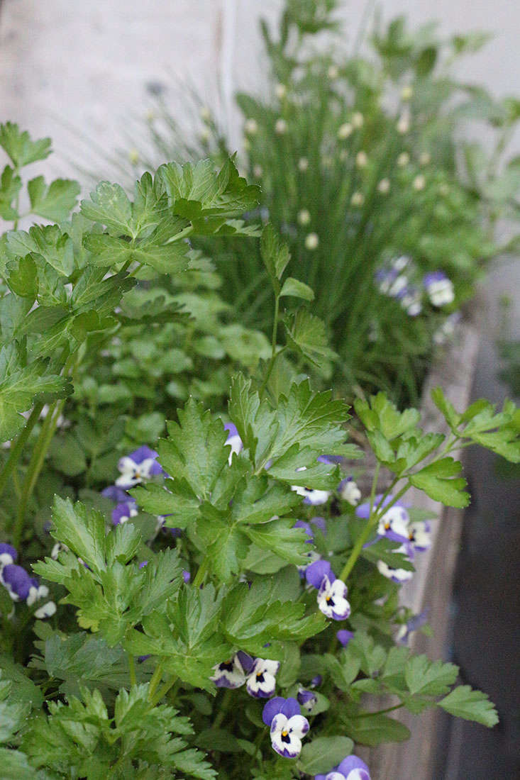 23 And Me My Favorite Edible Plants To Grow In Shade Gardenista