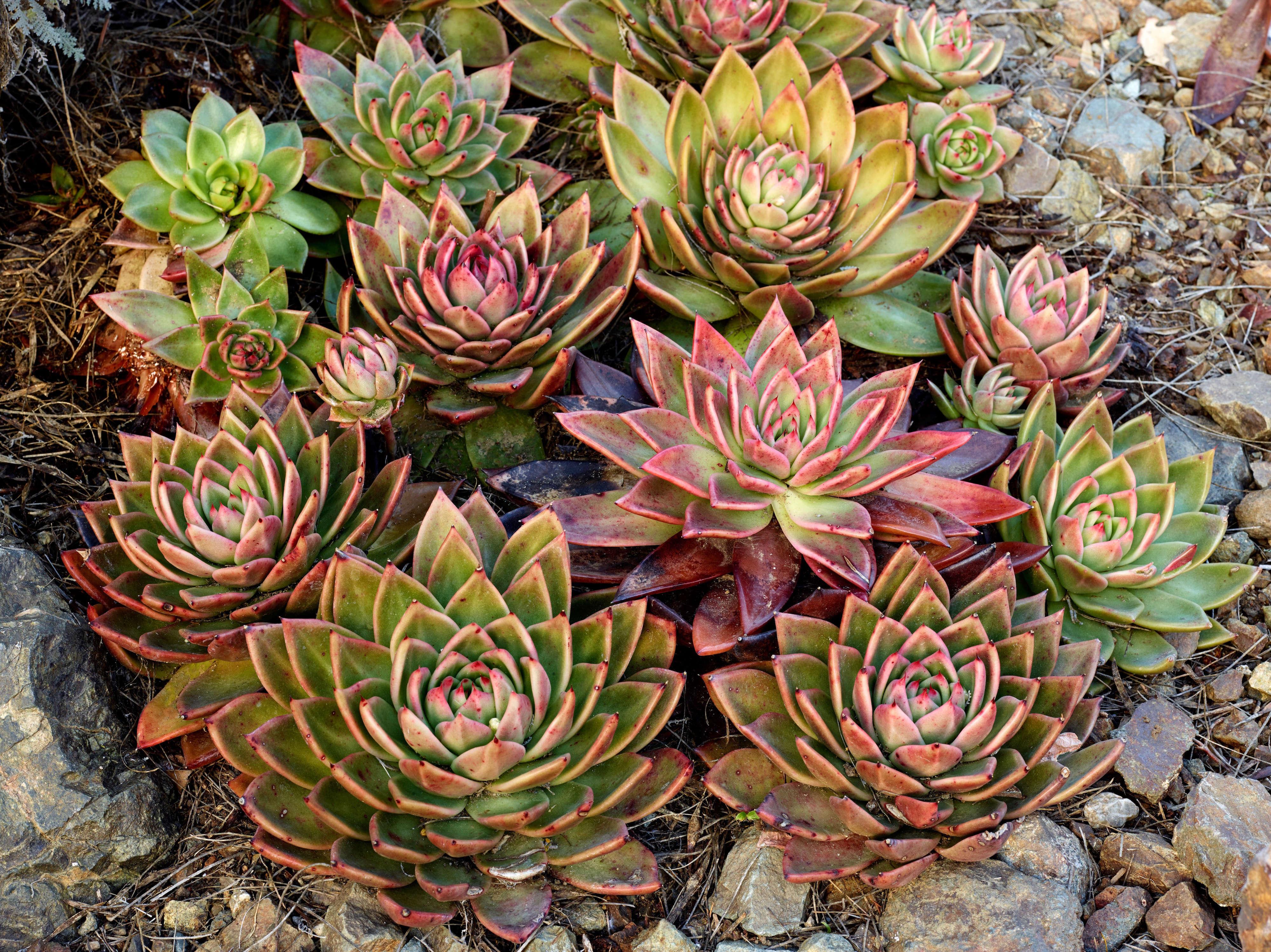 Beau How To Successfully Grow Echeveria: A Field Guide To Planting, Care, And  Design On Gardenista