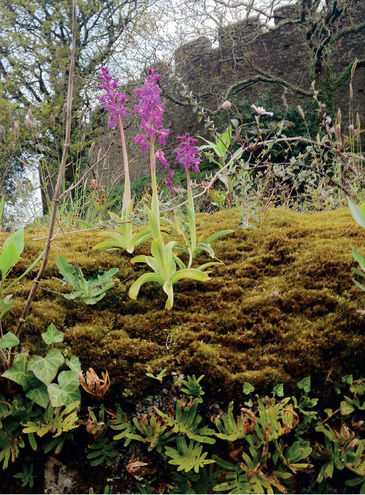 See more in Required Reading: Landscape of Dreams, the Bannermans' Cornish Castle Garden. Photograph by Isabel Bannerman and Dunstan Baker.