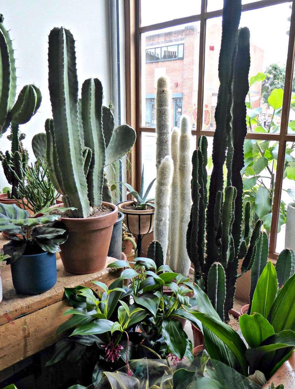 Gardening 101 totem pole cactus gardenista