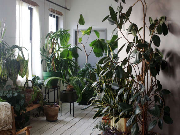 House Plants browse houseplants - gardenista