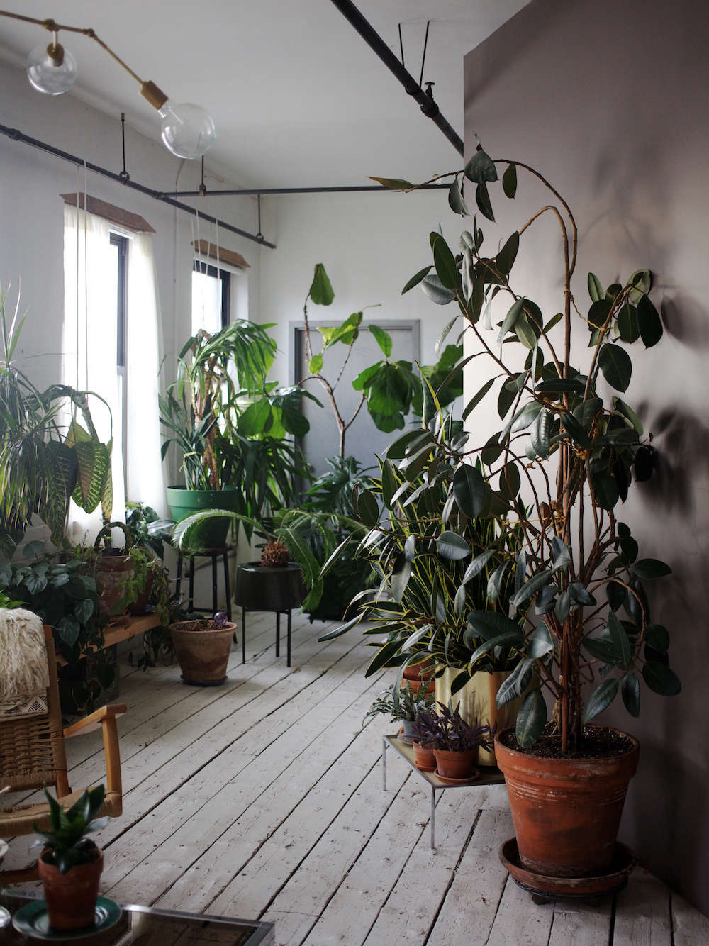 brooklyn loft with tropical houseplants and white painted floors