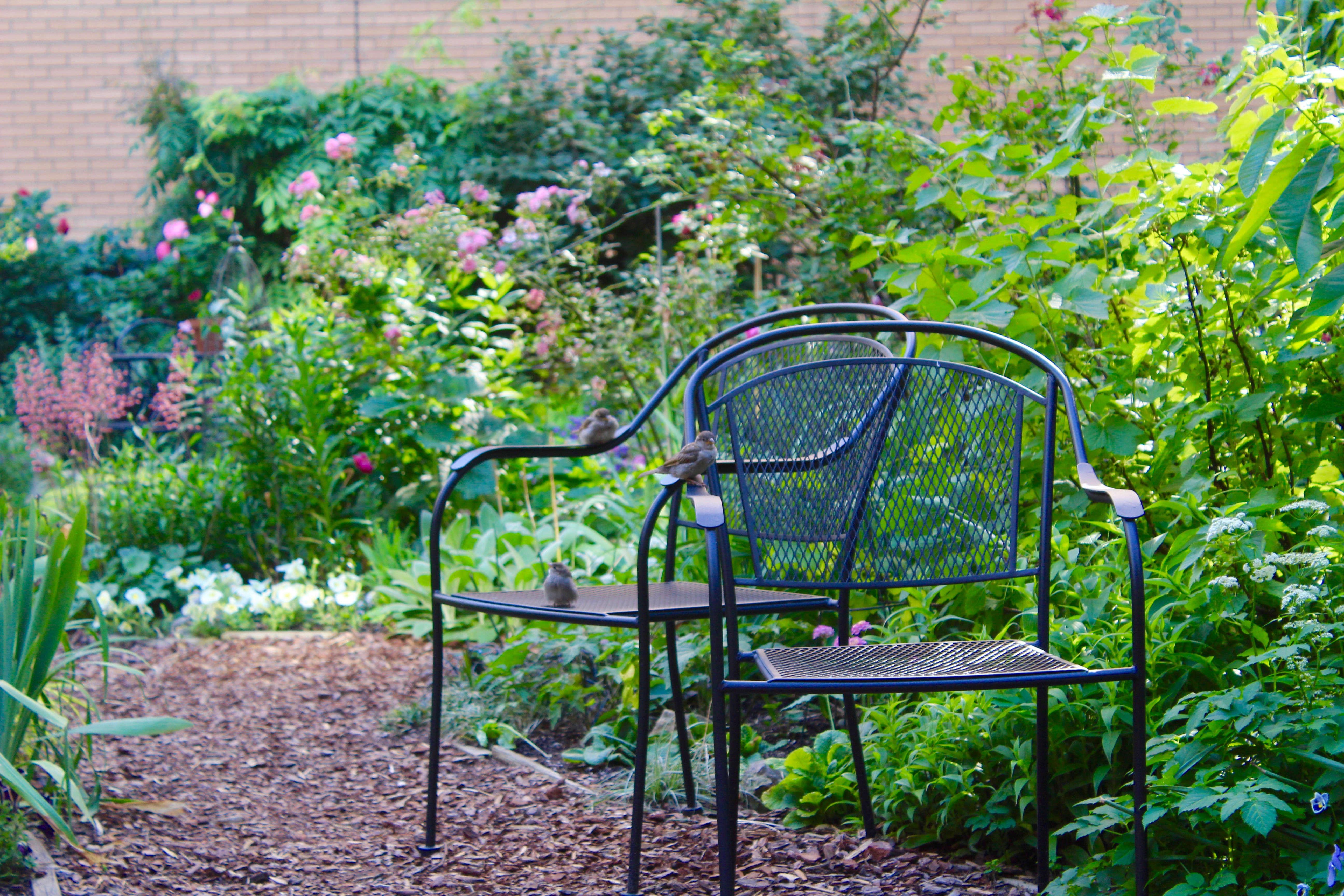my garden story a secret rooftop oasis on manhattan s upper west