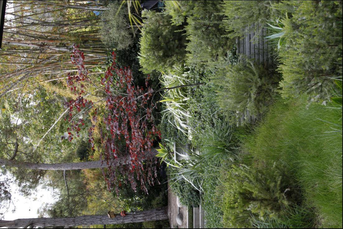 Mark Tessier Santa Monica Garden Garden Carex