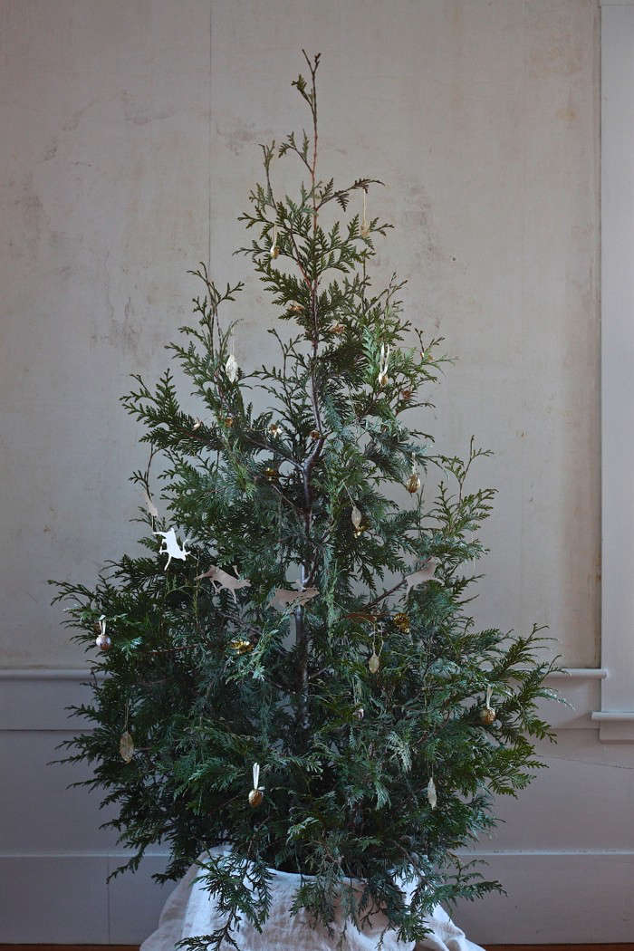 diy live christmas tree thuja