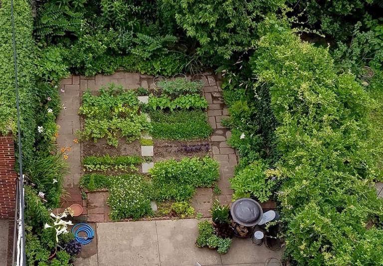 backyard gardening. Container Gardening: 12 Shade-Loving Plants In My Backyard Gardening