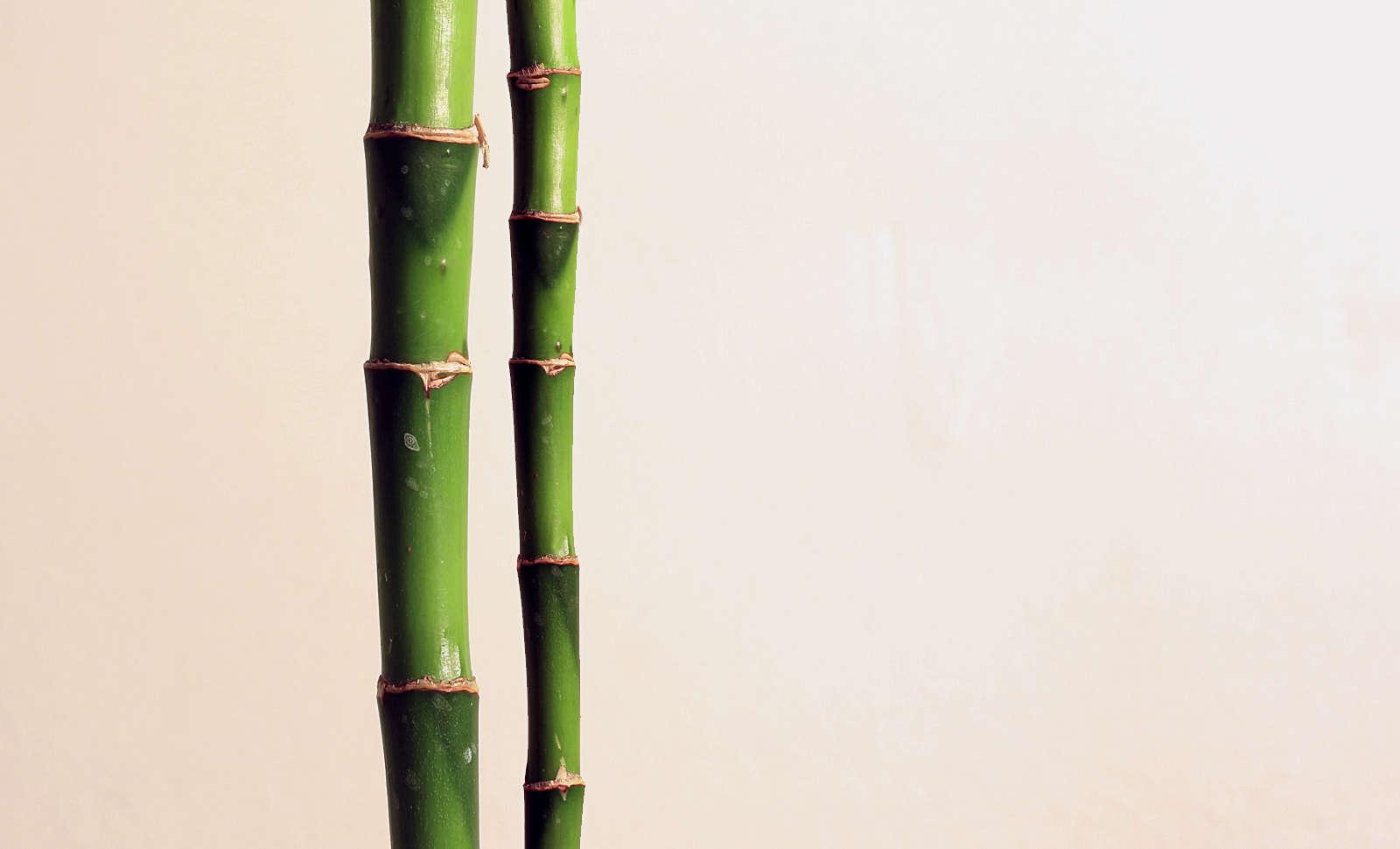 Lucky Bamboo stalk Photo by Gabriel Caparo