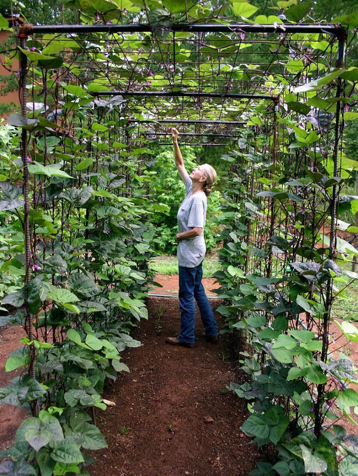 Bean Trellis Ideas Part - 31: Bean-tunnel-diy-vegetable-garden-6-gardenista_0