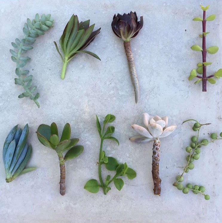 A strand (shown at lower right) complements other succulents in a pot or planter. Thecollection ofSucculent Cuttings is$.99 oneBay.
