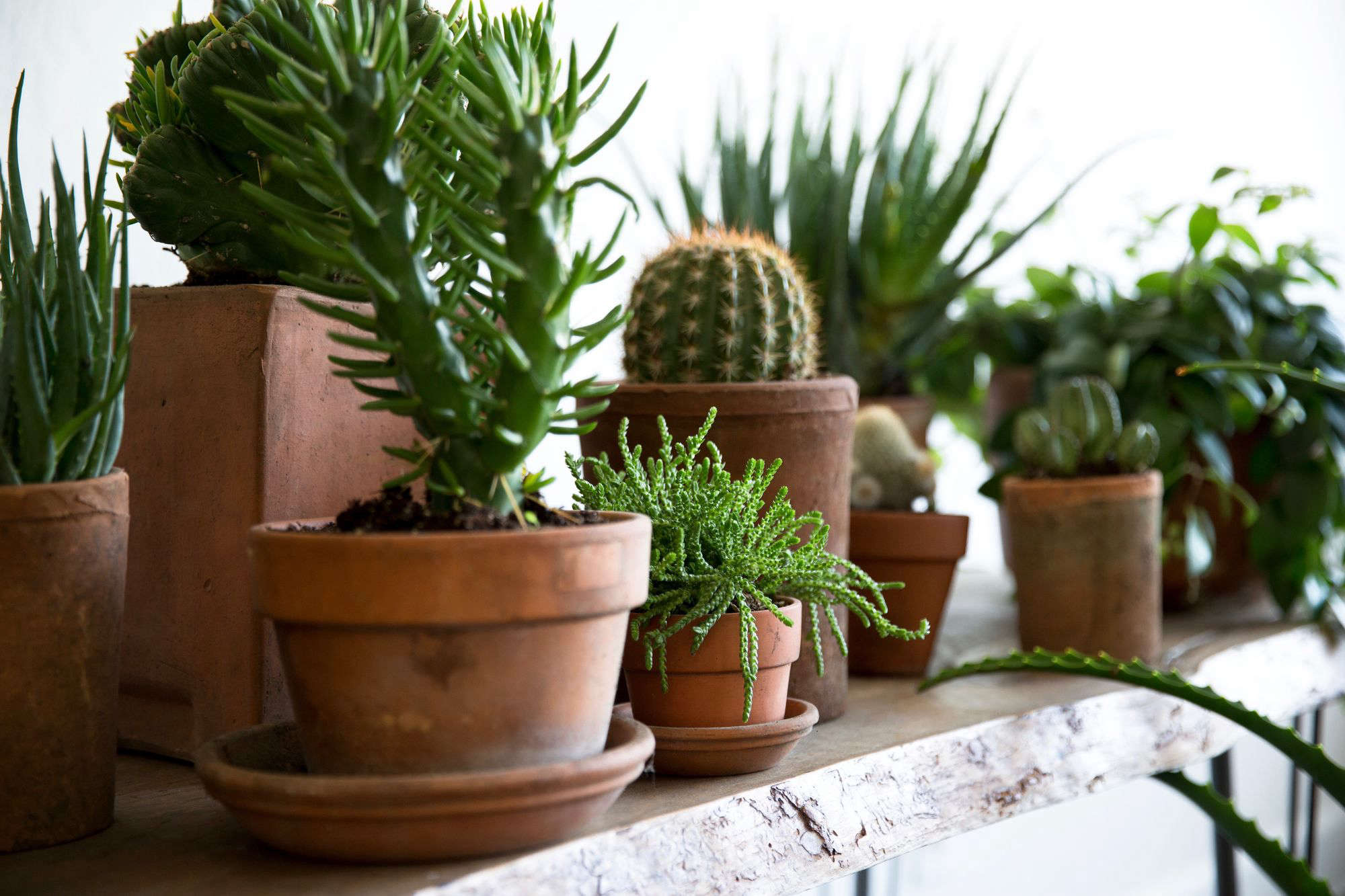 How to Successfully Grow Houseplants: A Field Guide to ...