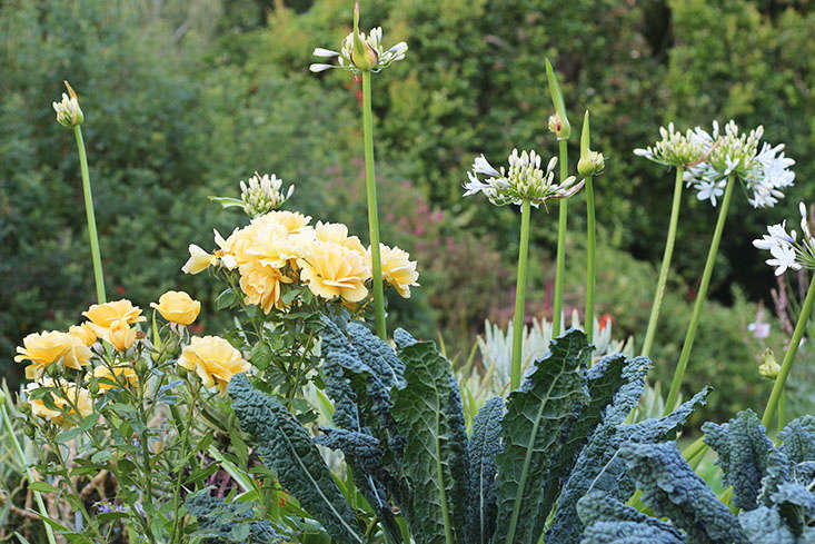 Kale and roses. See more in 23 and Me: My Favorite Edible Plants to Grow in Shade. Photograph by Marie Viljoen.