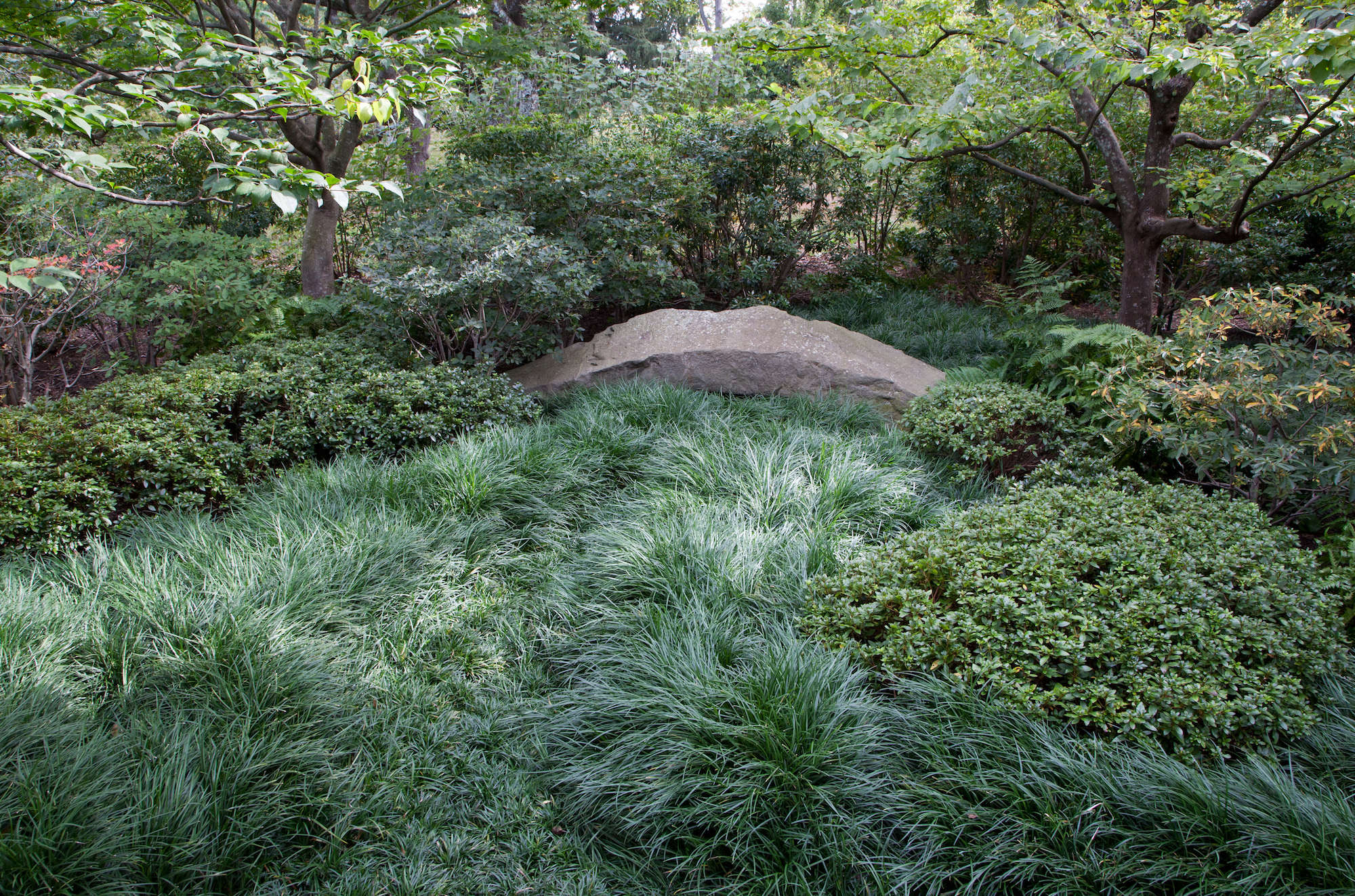 Mondo Grass Patch In Japanese Inspired Garden Irvington