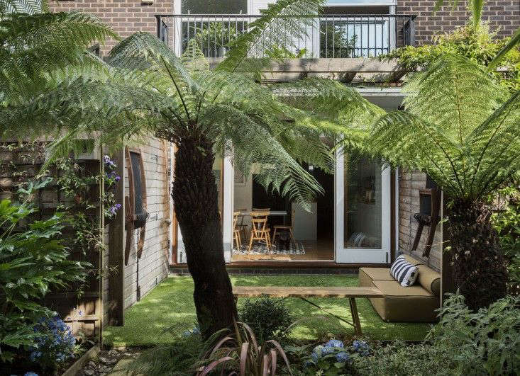 Tree Fern London Garden Matthew Williams
