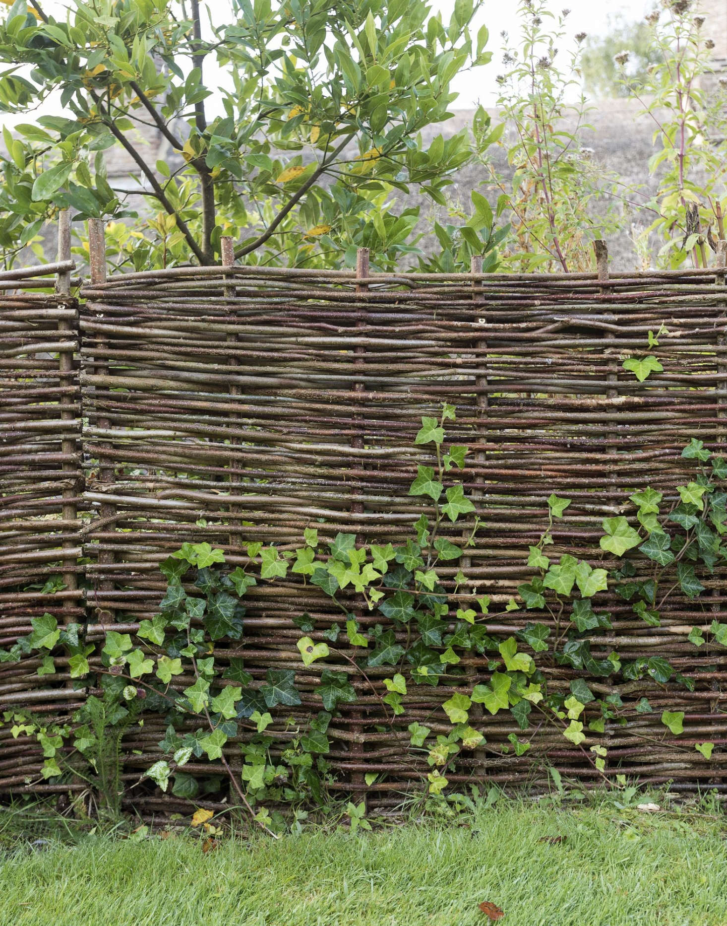 Everything You Need To Know About Fences Amp Gates Gardenista