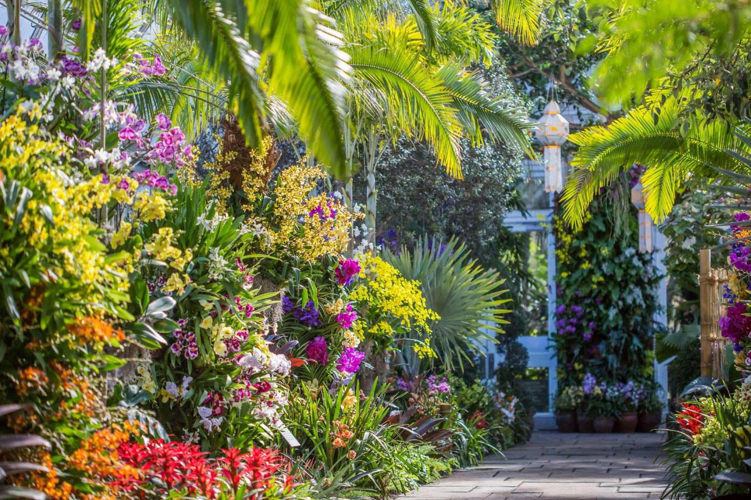 Gardening 101 Orchids Gardenista