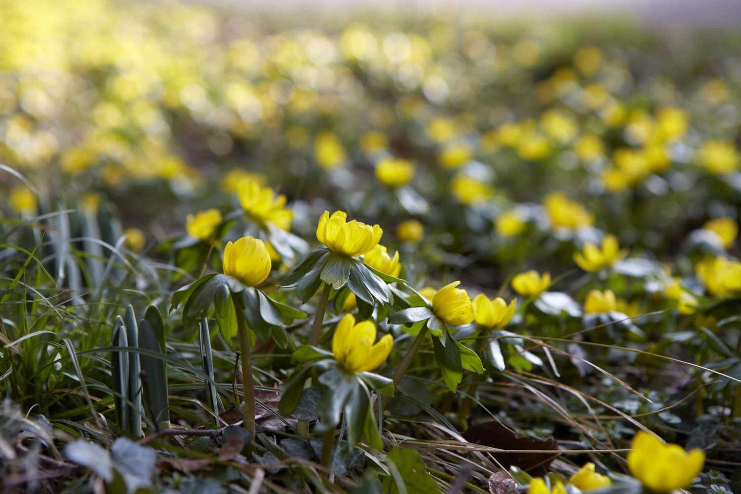 《圣蛇》:《海藤》,冬季之春。