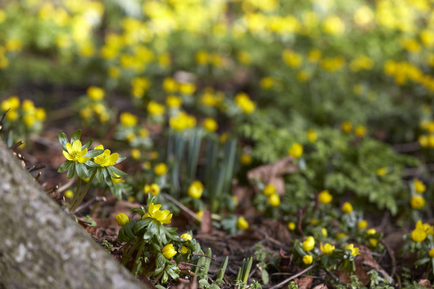 春天早期,春天就开始了。
