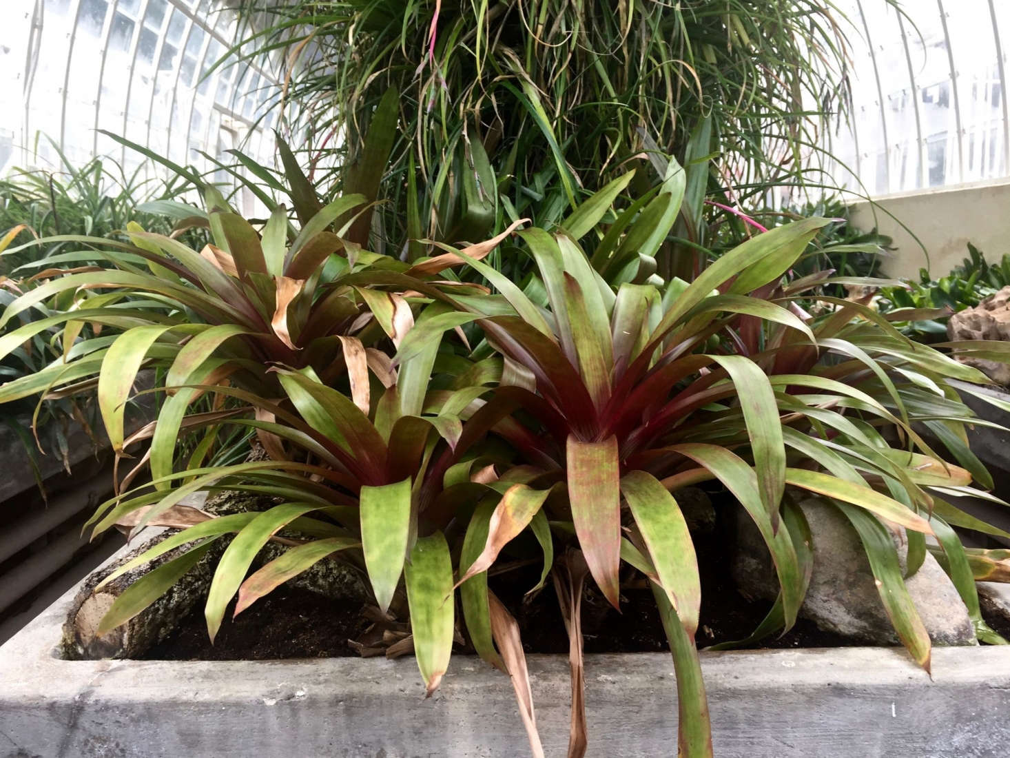 Gardening 101 Bromeliads Gardenista