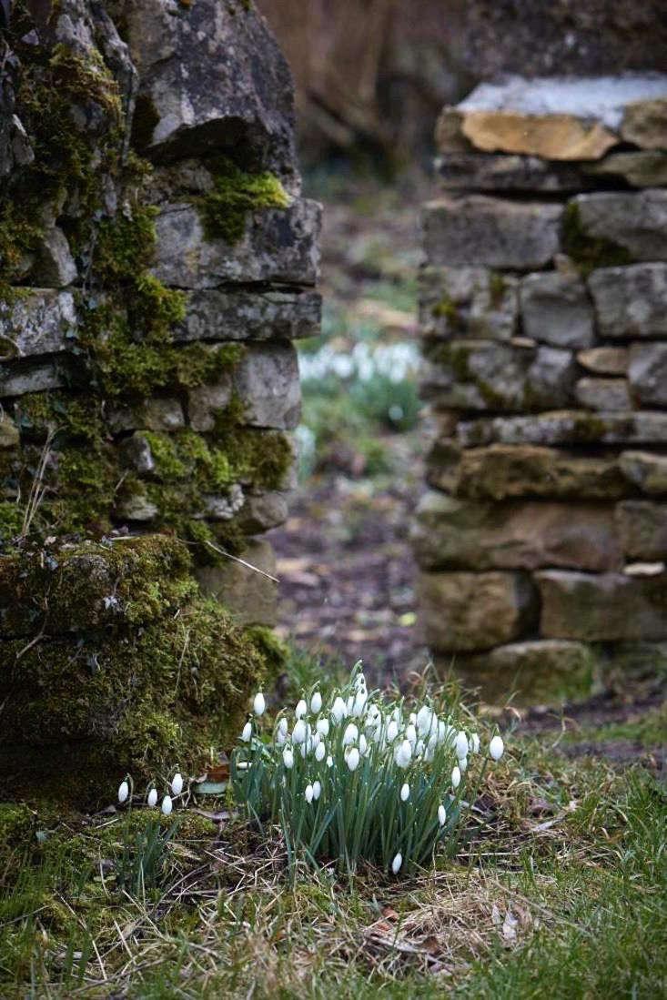 Garden Visit Snowdrops Season At Cotswold Farm Gardenista
