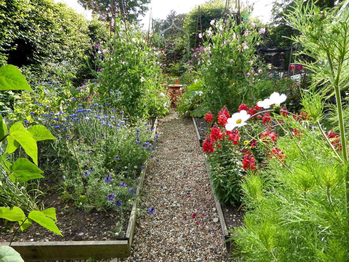 See more of this companionable plot in Behind the Hedges: Catherine Horwood's Hidden Kitchen Garden. Photograph by Clare Coulson.