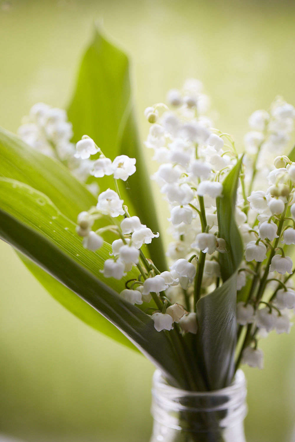 Lily of the valley rethinking a springtime posy gardenista a classic spring posy izmirmasajfo
