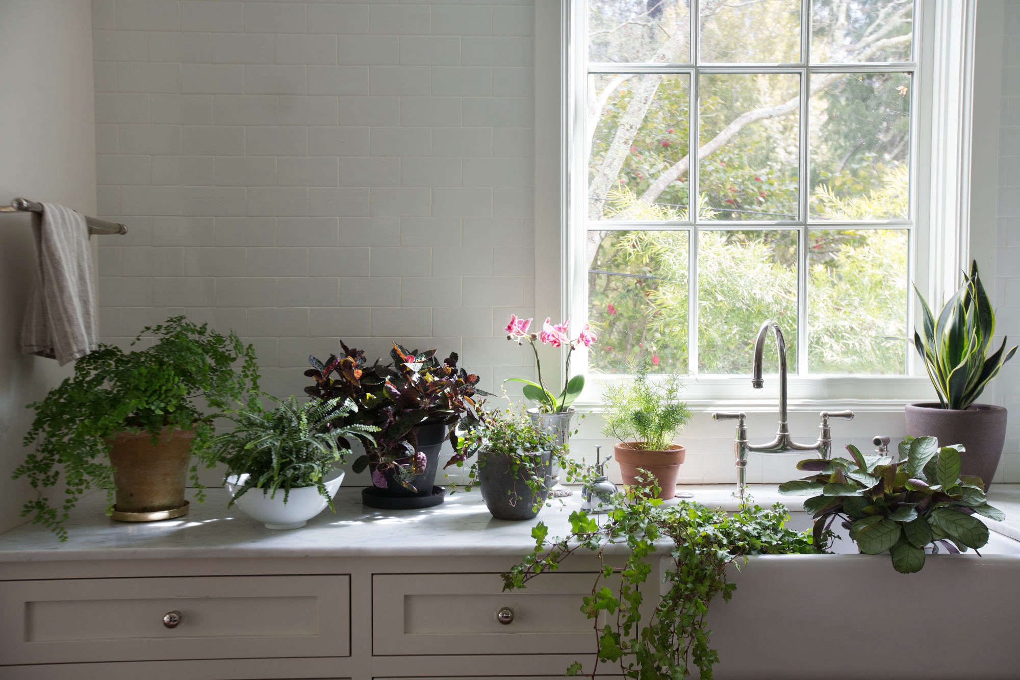 Best Houseplants 9 Indoor Plants For Low Light