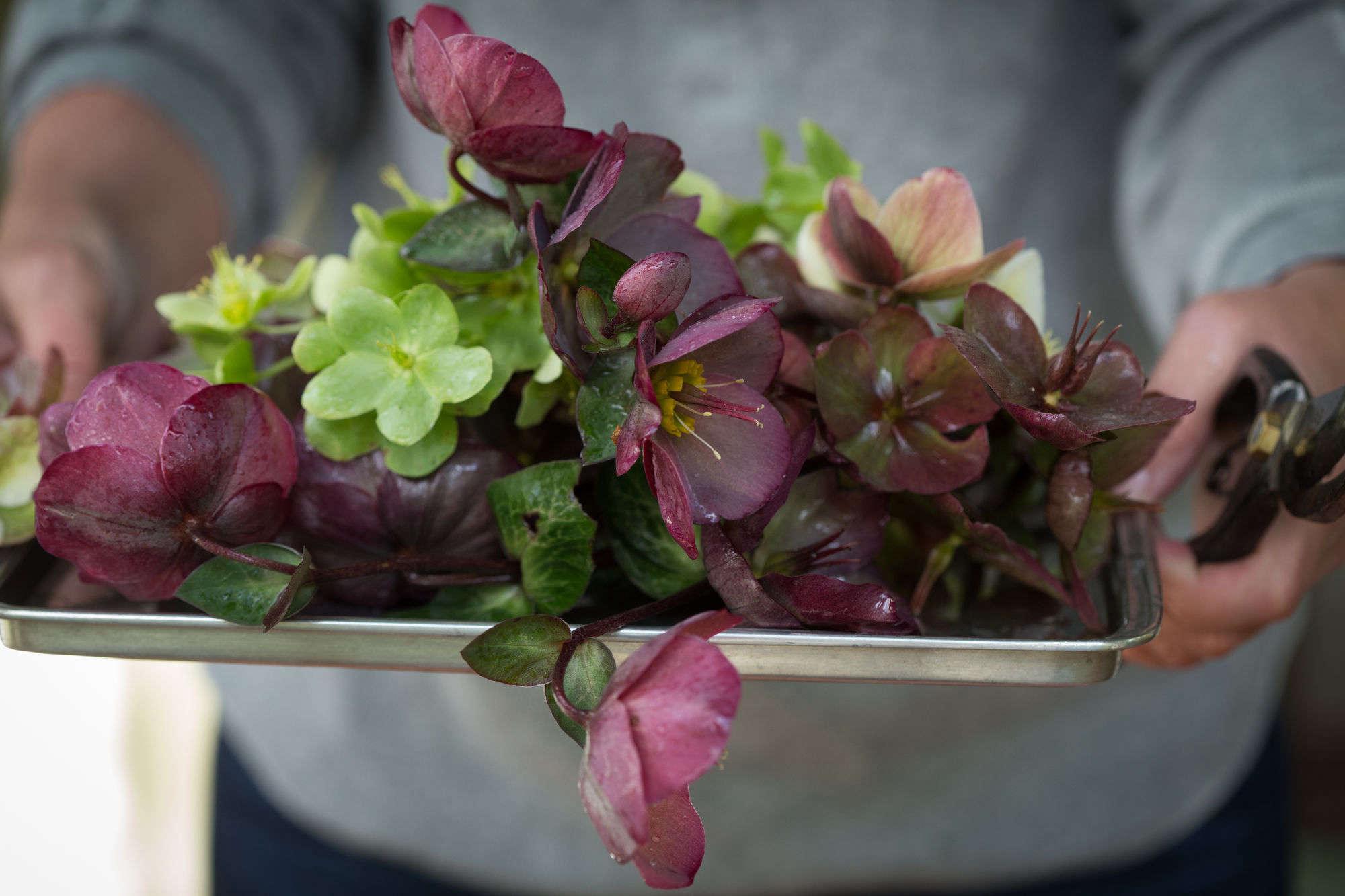 Floral Arrangement Pictures browse floral arrangements - gardenista