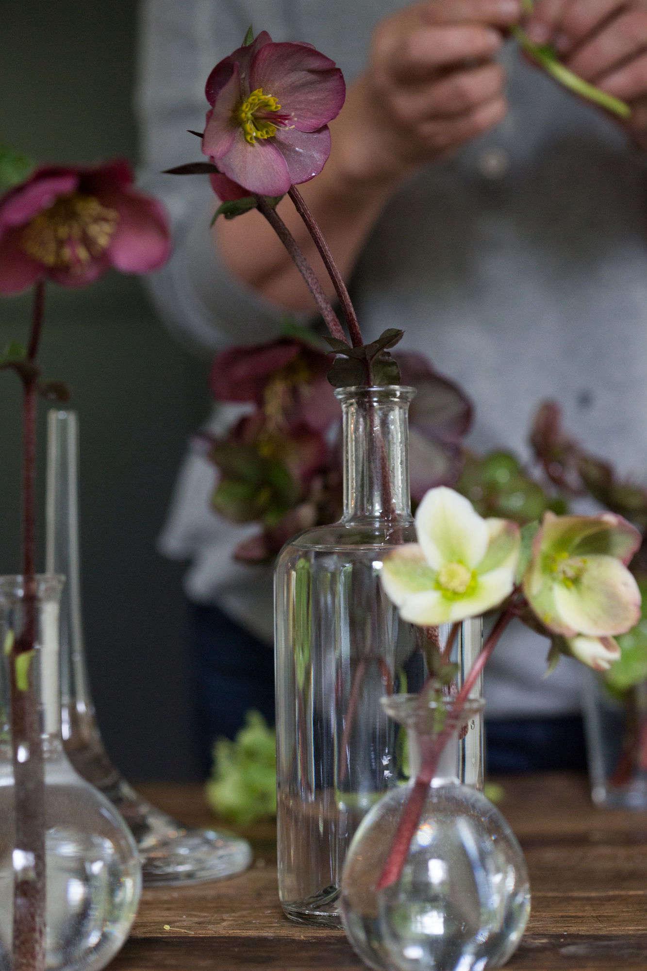 Cut flowers how to help hellebores last longer gardenista hellebores in clean vases of cool water izmirmasajfo