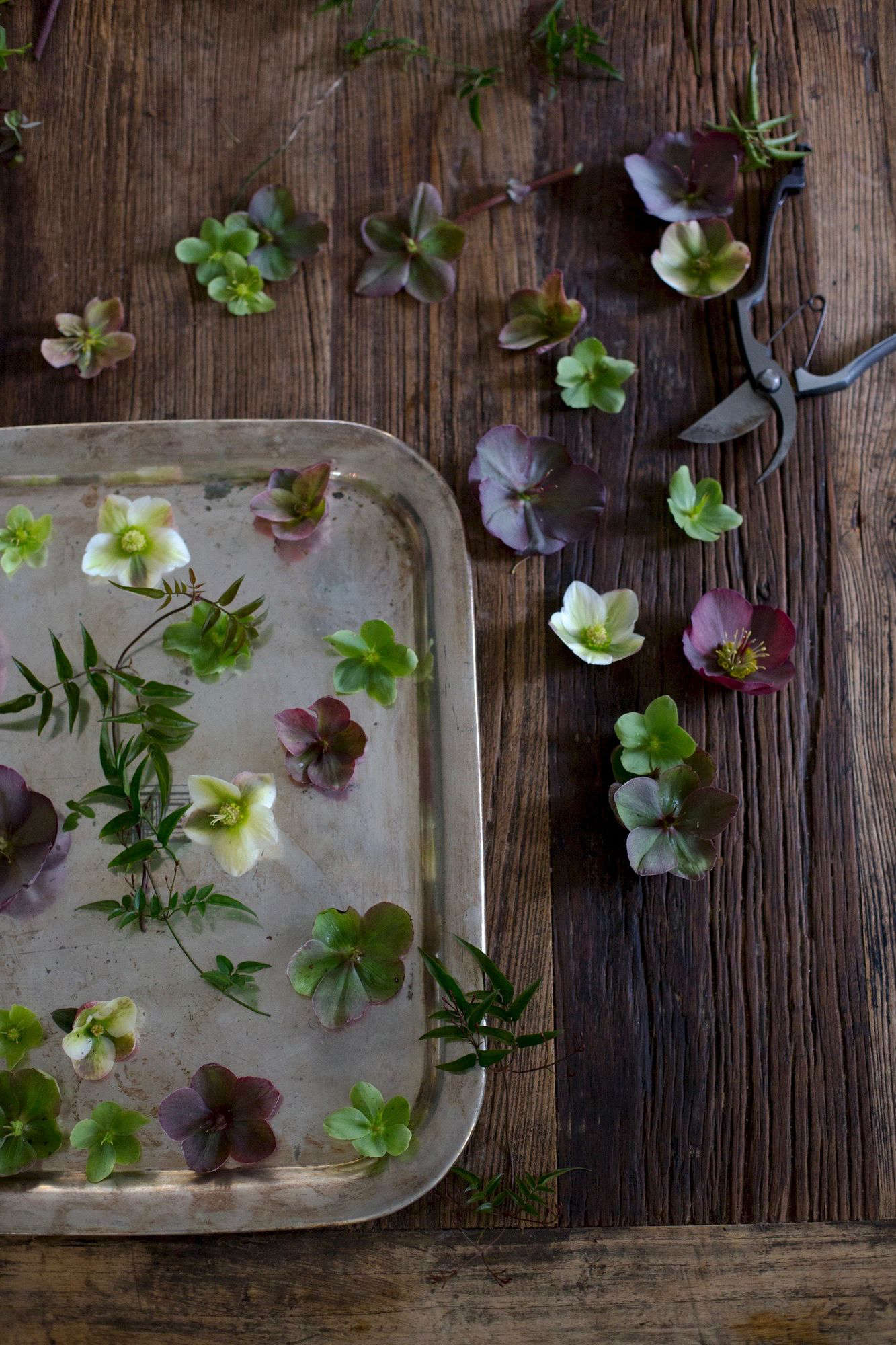 Cut Flowers How To Help Hellebores Last Longer Gardenista