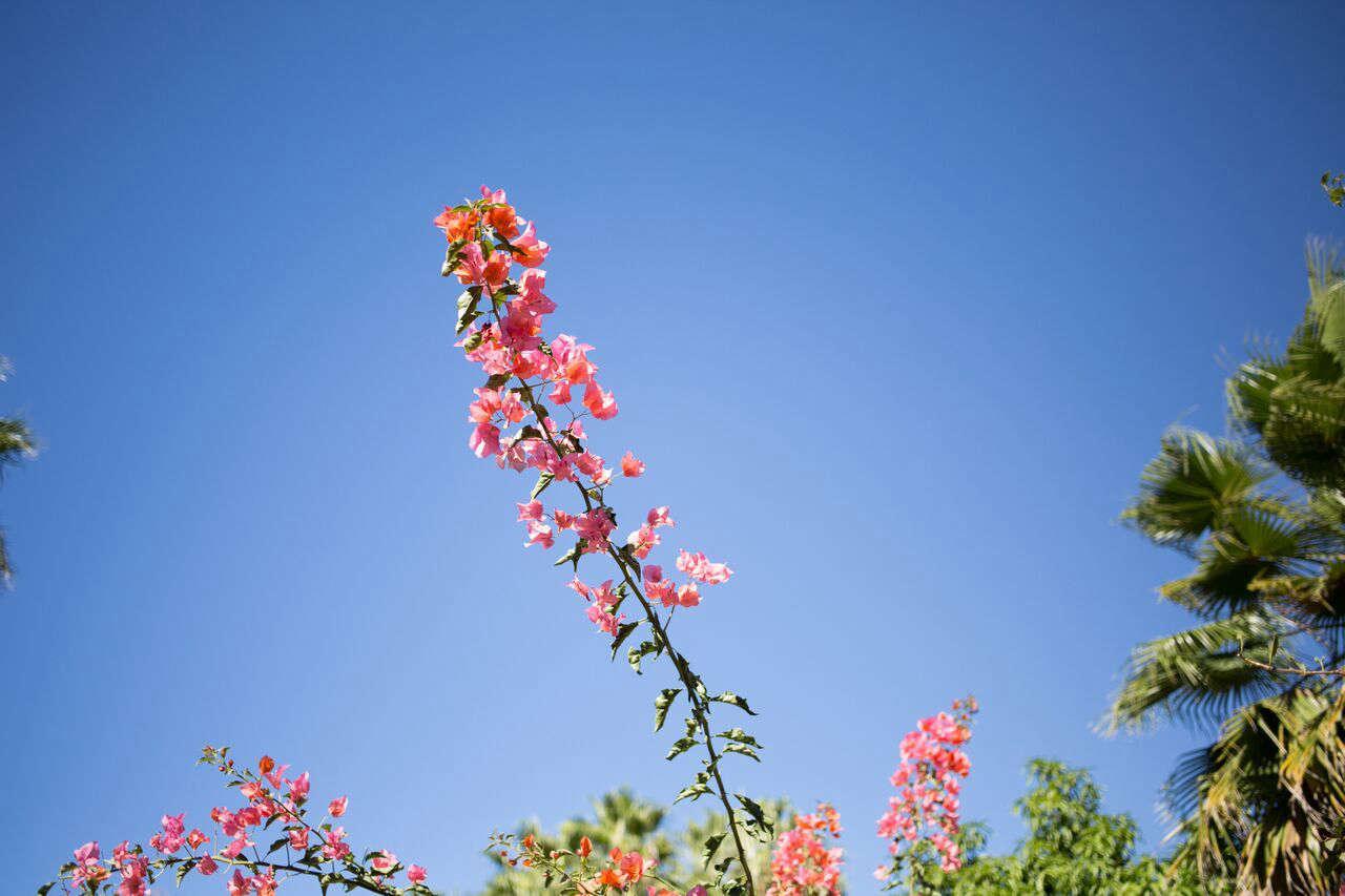 一种新的春天就会变成一种崭新的。