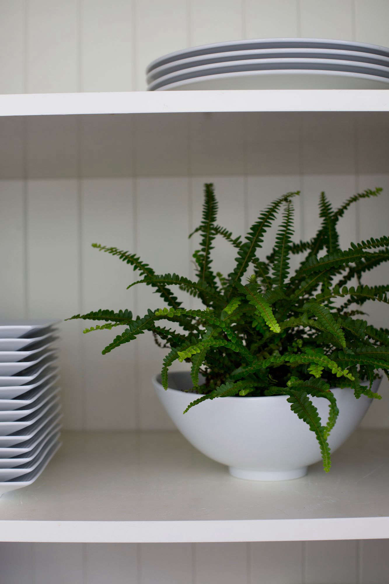 A Lemon Button Fern in a 4-inch pot is $7.99 from 9Greenbox. & Best Houseplants: 9 Indoor Plants for Low Light - Gardenista
