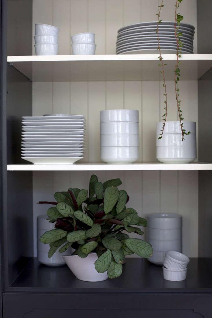 Best Houseplants: 9 Indoor Plants for Low Light - Gardenista