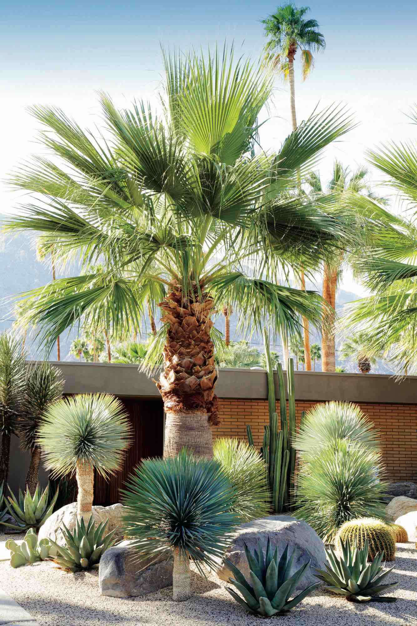 A Dry Garden In Californiau0027s Coachella Valley, Designed By Marcello  Villano, Pairs Fan Palm