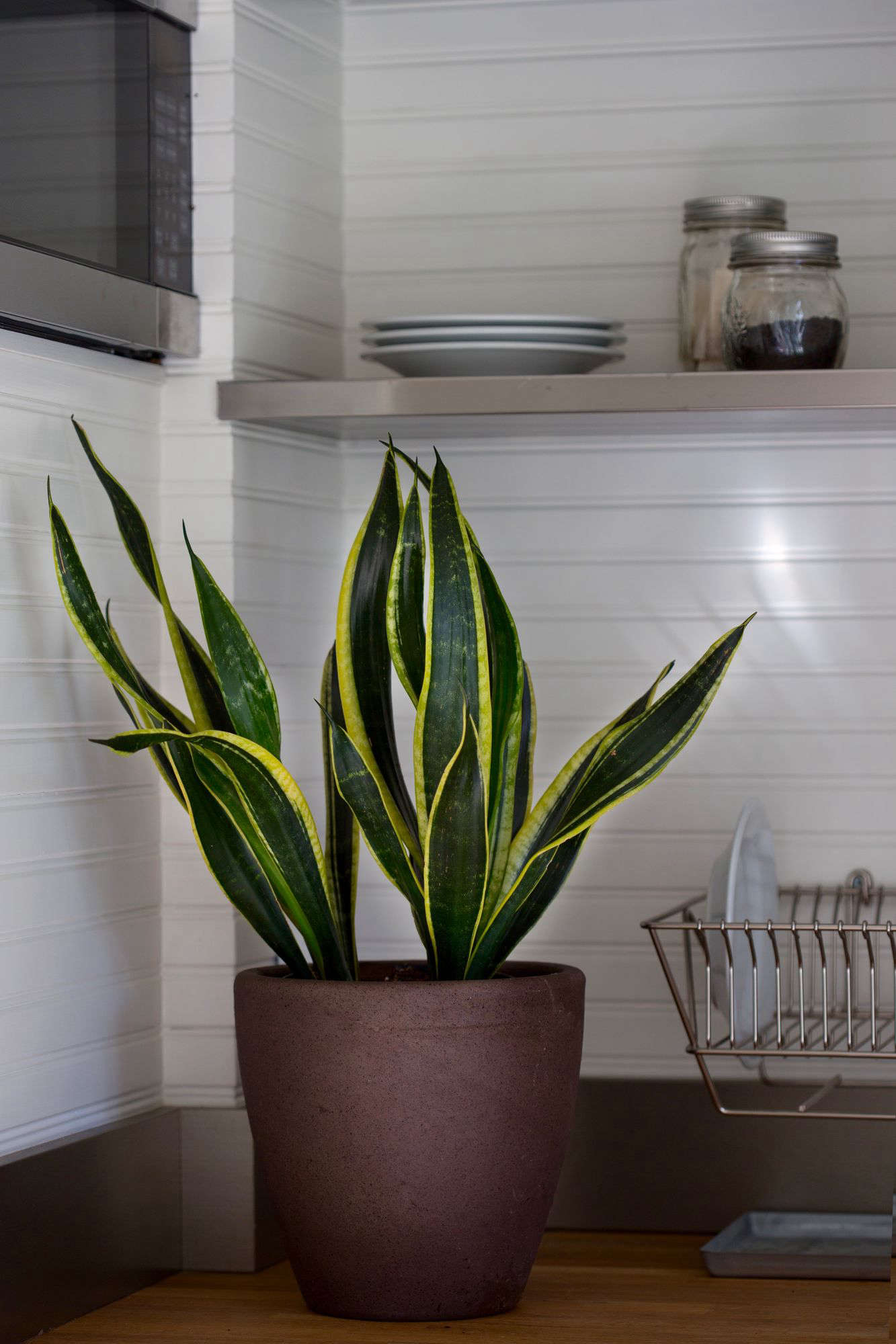 Plant Doctor: How to Save a Dying Houseplant - Gardenista
