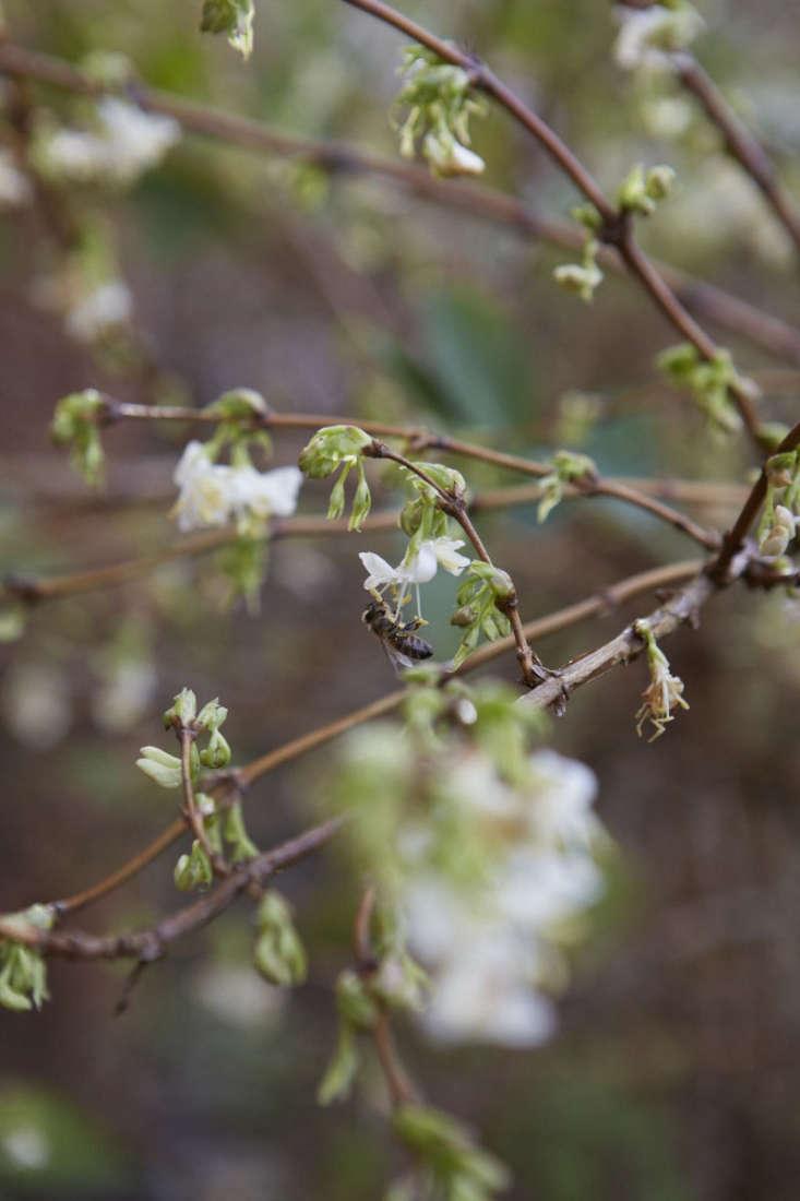 7 Fragrant Favorites Winter Flowering Scented Shrubs