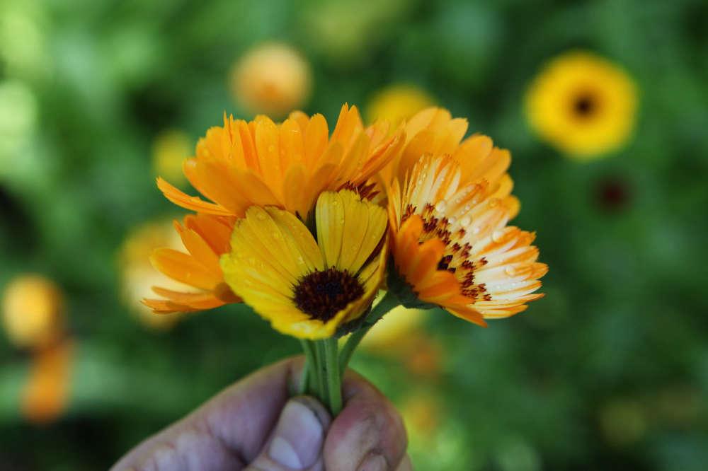 See more of gardening editor Allan Jenkins&#8