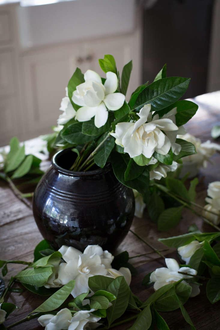 Gardenias Gardenia Flowers By Mimi Giboin